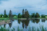 Summer landscape trees near a small lake