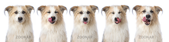 Cute mixed breed dog isolated on white background