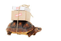 Tortoise Slow Mail