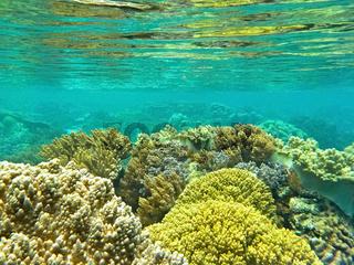 Korallenwelt unter dem Wasserspiegel