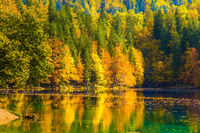 Fantastically beautiful autumn forests
