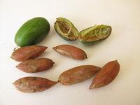 Nüsse von der der Nusseibe, Torreya nucifera