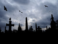 crows flying and perched on old gothic style gravestone in silhouette with tall memorials and crosses against an overcast cloudy sky