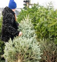 Mann entsorgt einen Weihnachtstannenbaum nach dem Weihnachtsfest