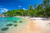 beach and coconut palm trees. Koh Tao