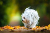 Mika und der Herbst