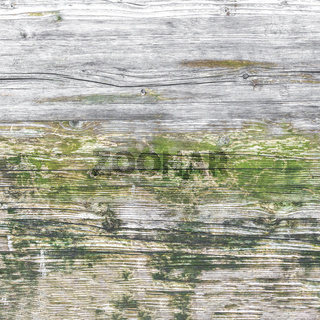 Moss and mold on wood