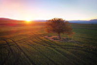 Beautiful aerial landscape of a lone tree at sunset.