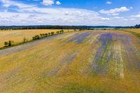 blühnende Wiesen und Felder