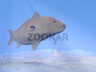 Carp fish underwater - 3D render