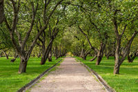 Green lawn in city park under sunny light. Pathway and beautiful trees in the park on green grass field. Sunlight background concept
