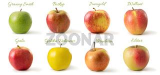 Apfelsorten Freisteller
