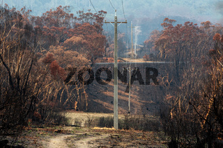 Burnt bush beside powerlines that have been replaced