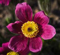 Nahaufnahme einer Blüte im Garten