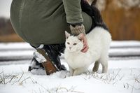 Cat in winter snow