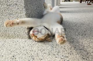 funny cat sleep