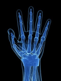 3d rendered illustration of the human hand