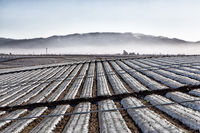 Agricultural Field Covered in Plastic Sheeting