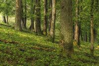 Waldstueck im Fruehling