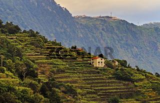Terraced Hillside Seixal Madeira Portugal