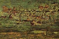 Oberflaeche eines abgestorbenen Baumstammes