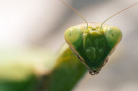 Insect portrait. Ultra macro
