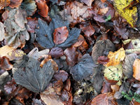 mixed fallen wet autumn leaves in different colors on a woodland floor