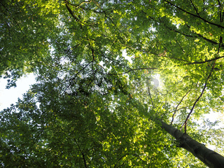 View into the treetops with the sun as backlight