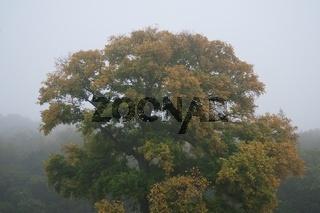 Baum im Herbstnebel