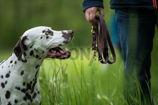 Walk with dog