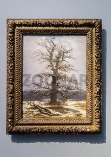 Eiche im Schnee, Caspar David Friedrich