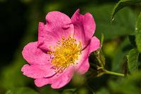 Makro/Blumen Blüten