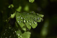 Fern leaves with small drops of water