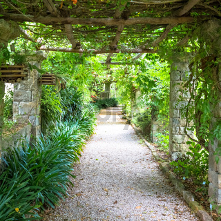 Garden with Pergola structure during summer season. Architecture and design inspired by nature.