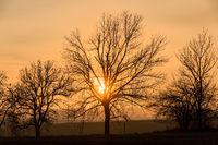 sunset over silhouette of tree, fall season
