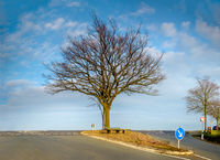 Landscape picture with a single tree in middle of the asphalt intersection on the horizon.