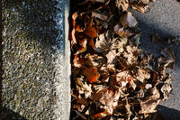 Autumn foliage lying beside the curbside. Autumnal and fall concept.
