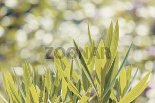 green grass plant leaf background