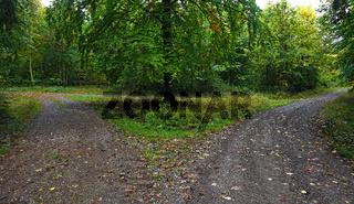 Weggabelung im Herbstwald
