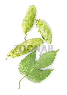 Hop and leaf