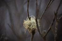 Plant life after bush fires in Australia