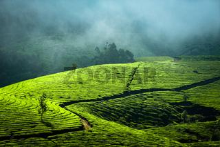 Sunrise at tea plantation. India, Munnar, Kerala