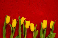 Of Yellow Tulip Spring Flowers, Red Wooden Background