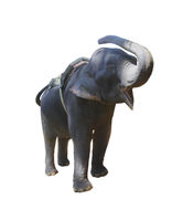 Elephant holding up the trunk screams isolated