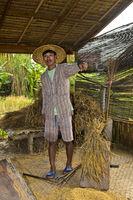 Junger Mann demonstriert das traditionelle Dreschen von Reis auf dem Dreschbrett