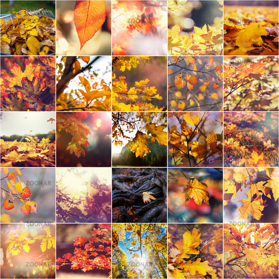 Autumn leaves collage