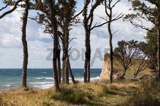 Steilküste und Bäume