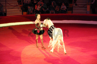 Animal trainer performing together with little horses in circus
