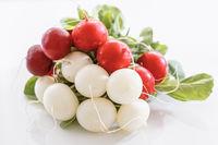 Bund mit roten und weißen Radieschen vor weißem Hintergrund