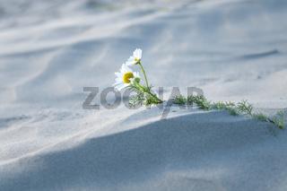 Impressionen am Sandstrand